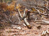 20091115ほだ木切り出し