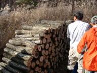 20091115ほだ木