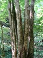 キープの森